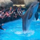 Colonie de vacances rencontre avec les dauphins